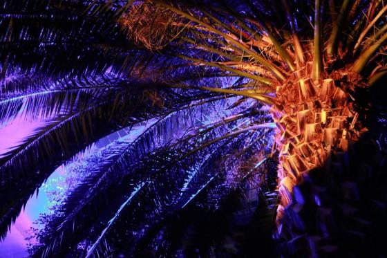 VZÁŘÍ/DED 2017, palmový skleník
