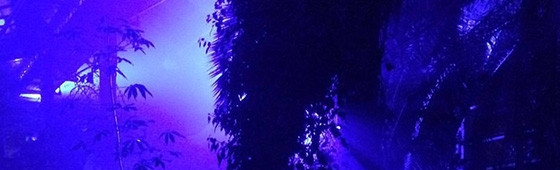 Večerní nasvícení skleníku
